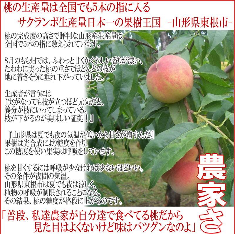 桃 もも 山形 モモ 送料込 白桃