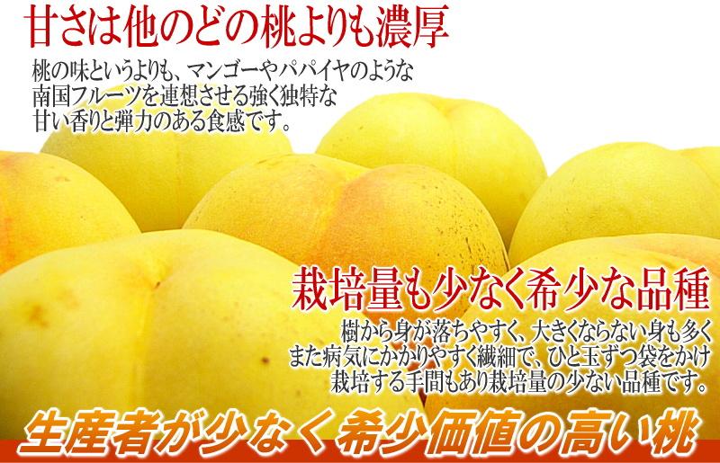 ピーチ 黄金桃 桃 もも 送料無料 山形 東根